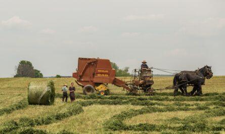 Amišové obdělávající svá pole.
