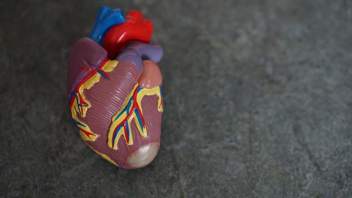 Srdce, jehož funkce má vliv na vysoký krevní tlak.